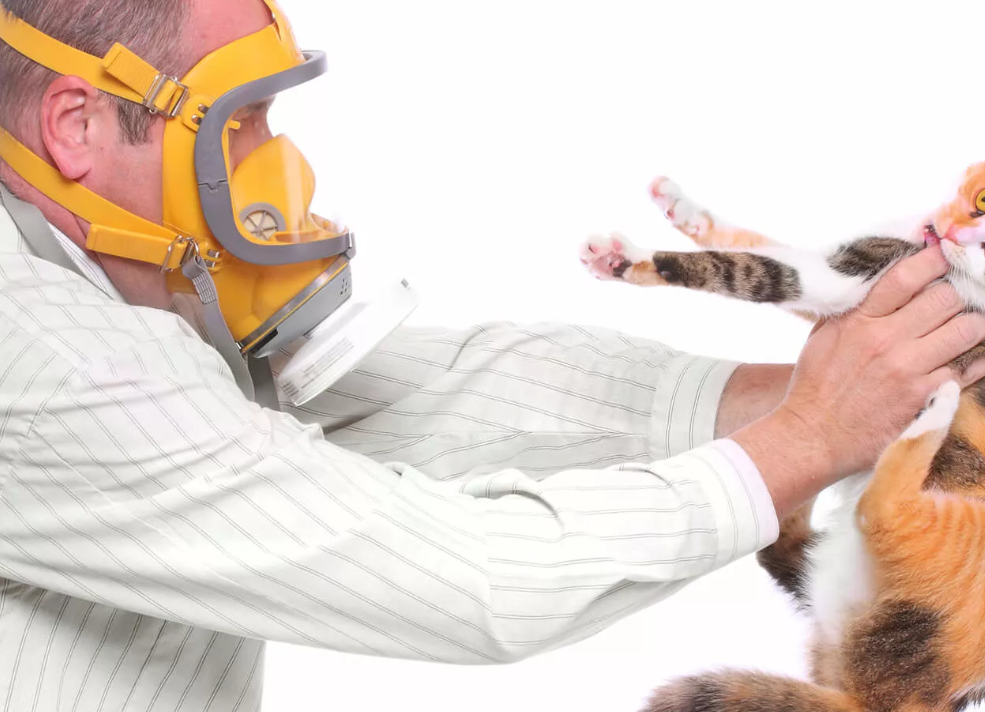 Коронавирус у кошек и передается ли человеку